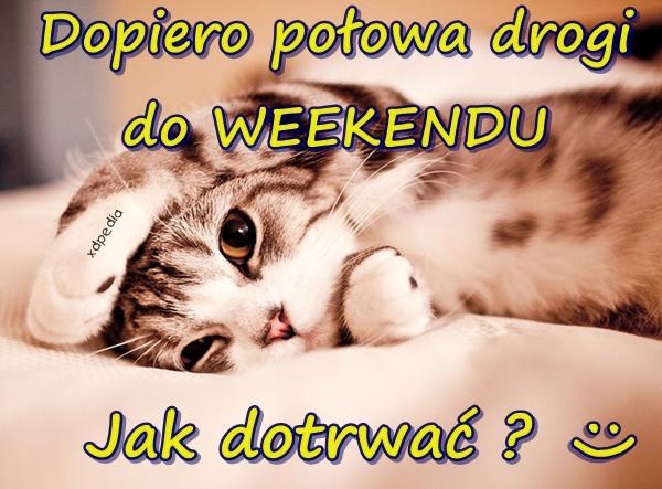 Dopiero połowa drogi do WEEKENDU :( Jak dotrwać? :) Tagi: kwejk, nauka, kot, praca, kociak, memy, kotek, mem, zmęczenie, besty.