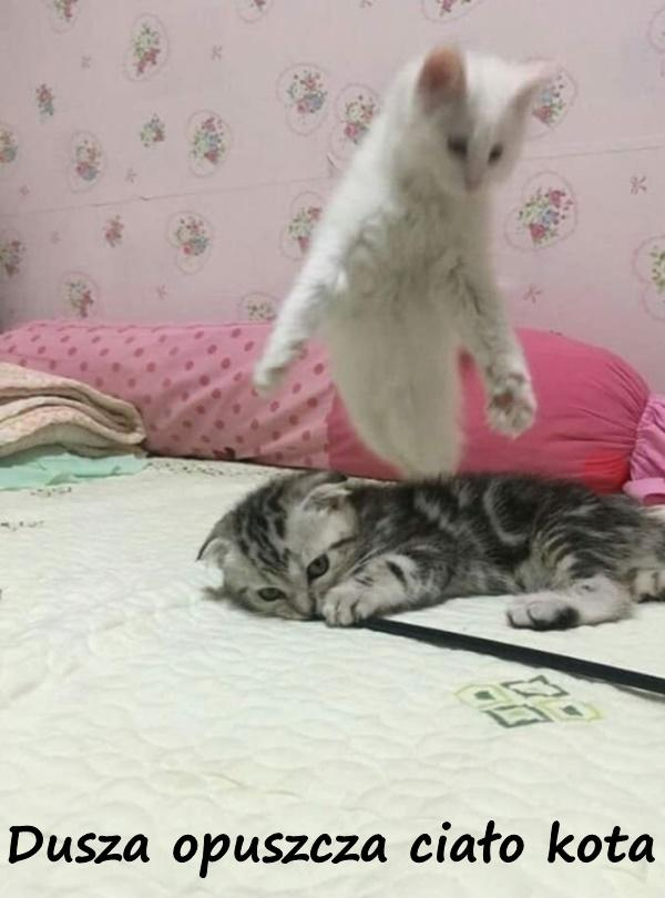 Dusza opuszcza ciało kota