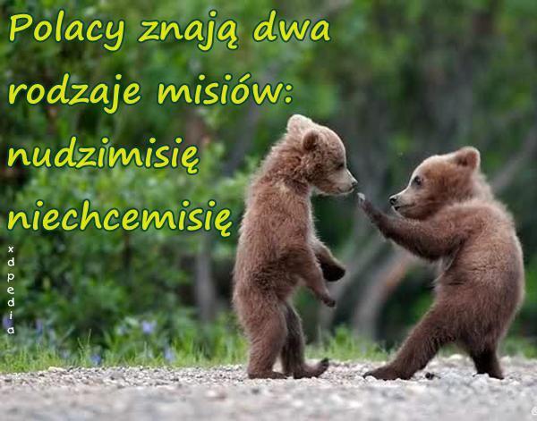 Polacy znają dwa rodzaje misiów: nudzimisię i niechcemisię