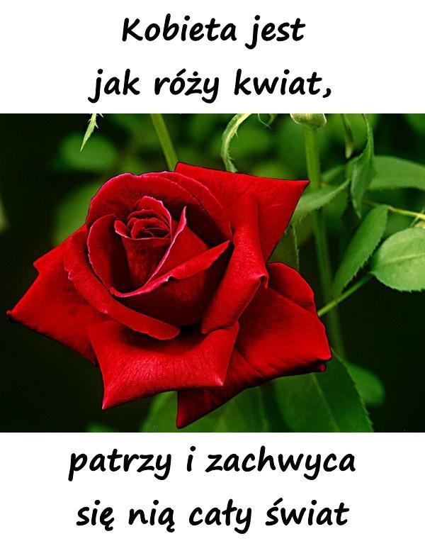 Kobieta jest jak róży kwiat, patrzy i zachwyca się nią cały świat