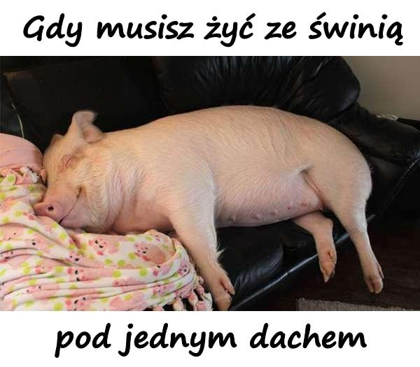 Gdy musisz żyć ze świnią pod jednym dachem