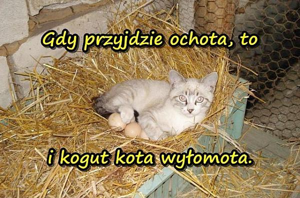 Gdy przyjdzie ochota, to i kogut kota wyłomota.
