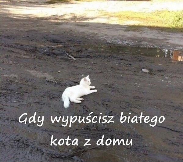 Gdy wypuścisz białego kota z domu