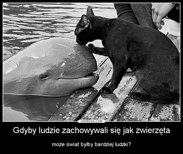Gdyby ludzie zachowywali się jak zwierzęta może świat byłby bardziej ludzki? Tagi: demotywator, świat, ludzie, zwierzęta, demot.