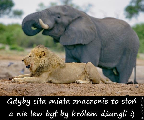 Gdyby siła miała znaczenie to słoń a nie lew był by królem dżungli :)