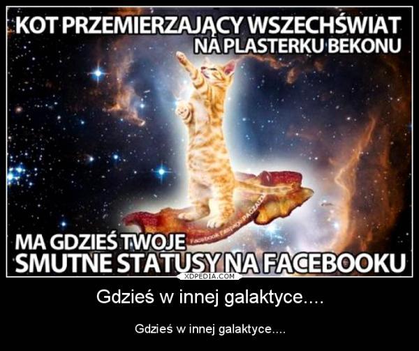 Kot przemierzający wszechświat na plasterku bekonu ma gdzies twoje smutne statusy na facebooku