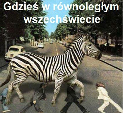 To nie zebra, Pani zebro.