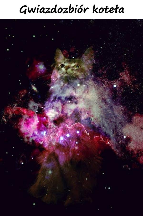 Gwiazdozbiór koteła