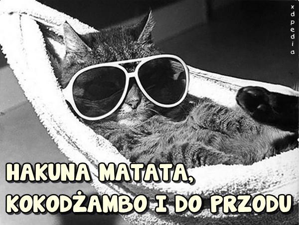 HAKUNA MATATA, KOKODŻAMBO I DO PRZODU Tagi: kwejk, kot, kociak, memy, kotek, mem, besty, koteł, luzak, wrzućnaluz.