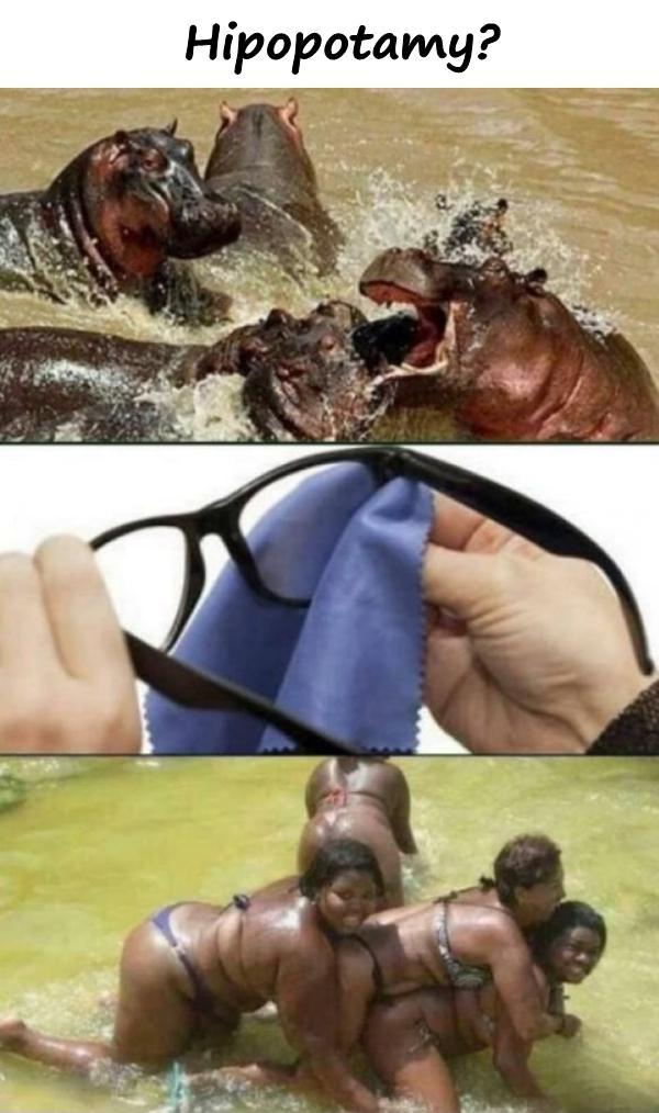 Hipopotamy?
