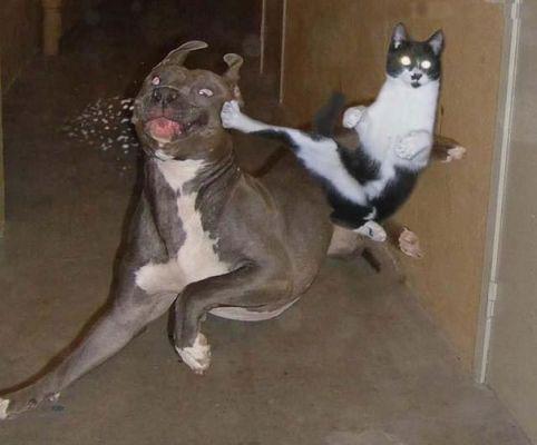 Mówiłem, że dostaniesz z karate