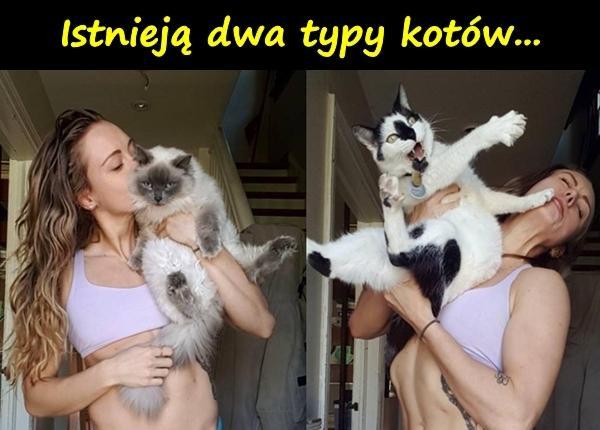 Istnieją dwa typy kotów...