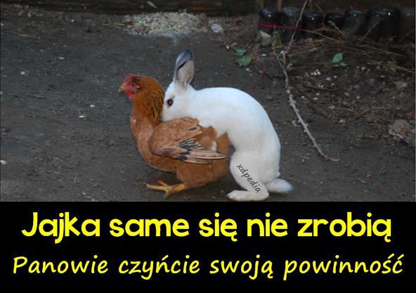 Jajka same się nie zrobią... Panowie czyńcie swoją powinność...