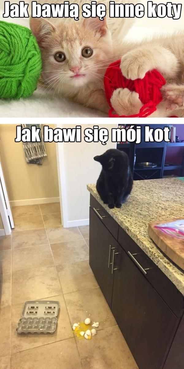Jak bawią się inne koty i jak bawi się mój kot