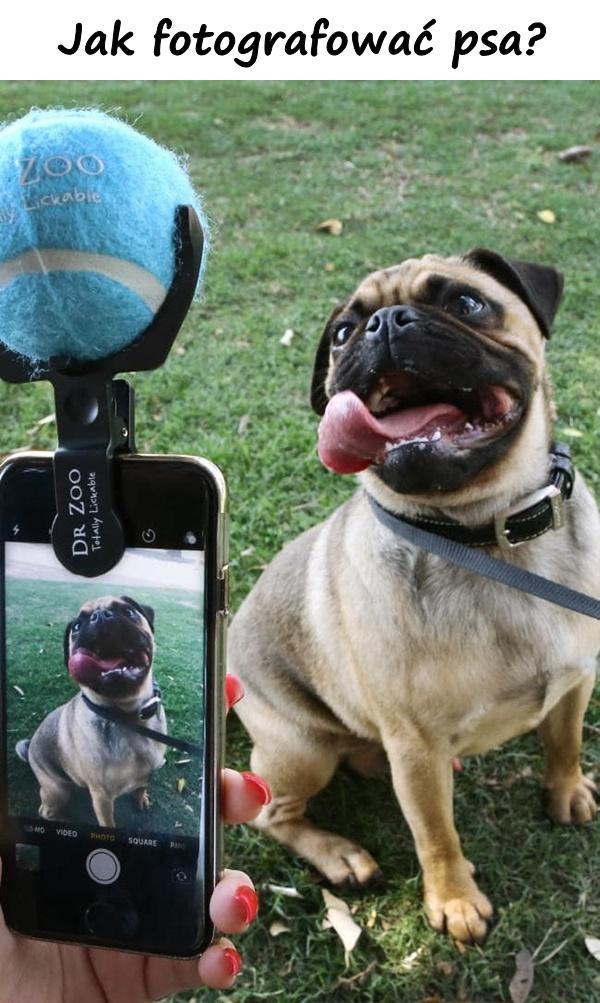 Jak fotografować psa?