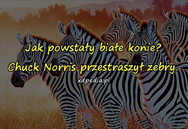 Jak powstały białe konie? Chuck Norris przestraszył zebry.