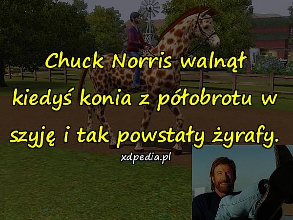 Chuck Norris walnął kiedyś konia z półobrotu w szyję i tak powstały żyrafy.