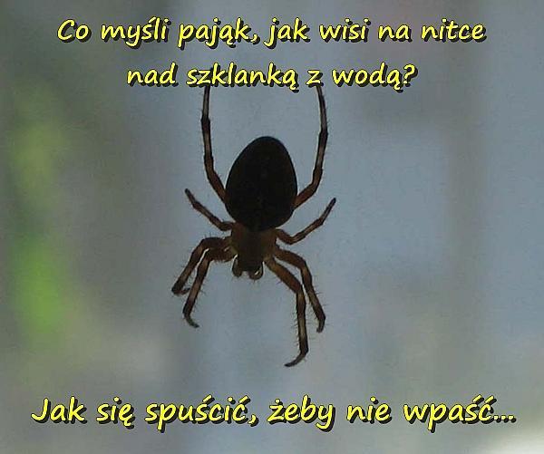 Co myśli pająk, jak wisi na nitce nad szklanką z wodą? - Jak się spuścić, żeby nie wpaść...