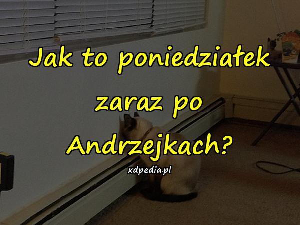Jak to poniedziałek zaraz po Andrzejkach?