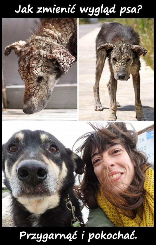 Jak zmienić wygląd psa? Przygarnąć i pokochać.