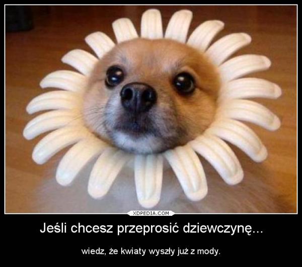 Jeśli chcesz przeprosić dziewczynę... wiedz, że kwiaty wyszły już z mody.