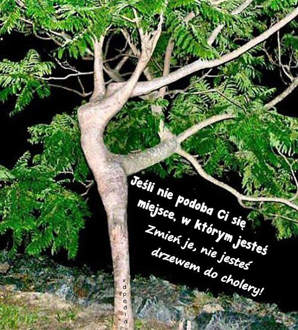 Jeśli nie podoba Ci się miejsce, w którym jesteś Zmień je, nie jesteś drzewem do cholery!