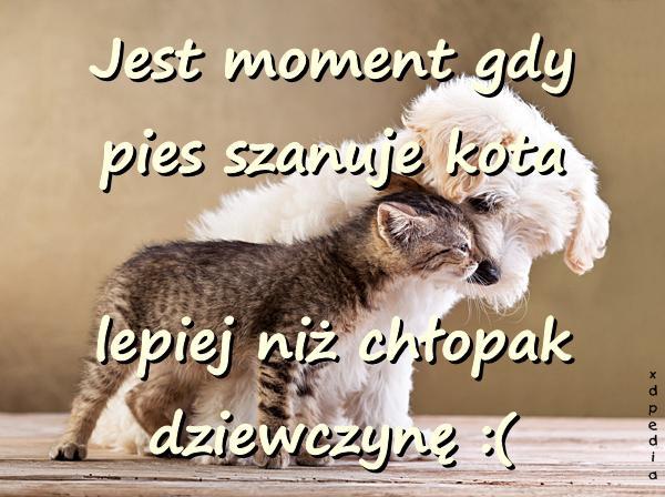 Związek Kot Miłość Cytat Obrazki Cytaty Sentencje Aforyzmy