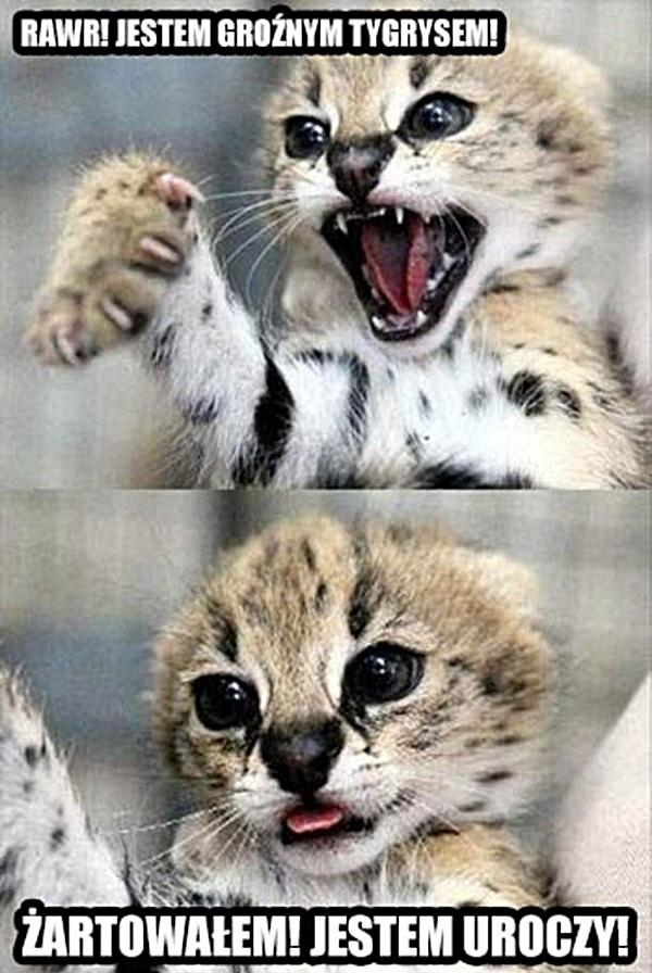 Jestem groźnym tygrysem! Żartowałem! Jestem uroczy!