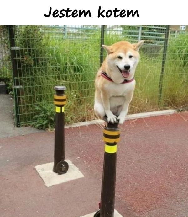 Humor Mem Kot śmieszne Obrazki Besty Pies Pieseł Memy