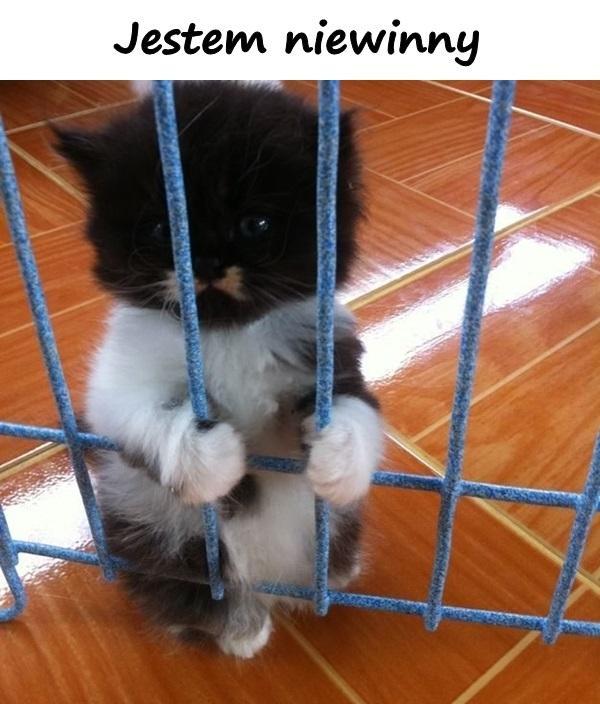Jestem niewinny