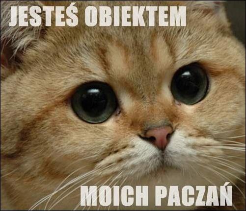 Jesteś obiektem moich paczań Tagi: kwejk, kot, kociak, memy, zainteresowanie, mem, słodziak, patrzenie, obserwacja, paczanie, paczam, obiekt.