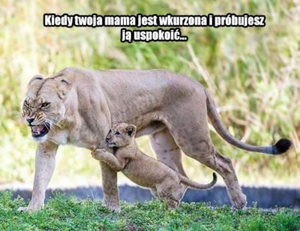 Kiedy mama jest wkurzona i próbujesz ją uspokoić