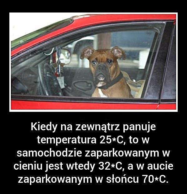 Kiedy na zewnątrz panuje temperatura 25 stopni, to w samochodzie zaparkowanym w cieniu jest wtedy 32 stopni, a w aucie zaparkowanym w słońcu 70 stopni.