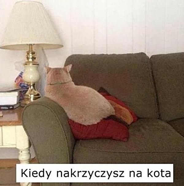 Kiedy nakrzyczysz na kota