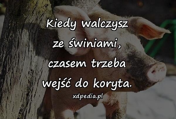 Kiedy walczysz ze świniami, czasem trzeba wejść do koryta.