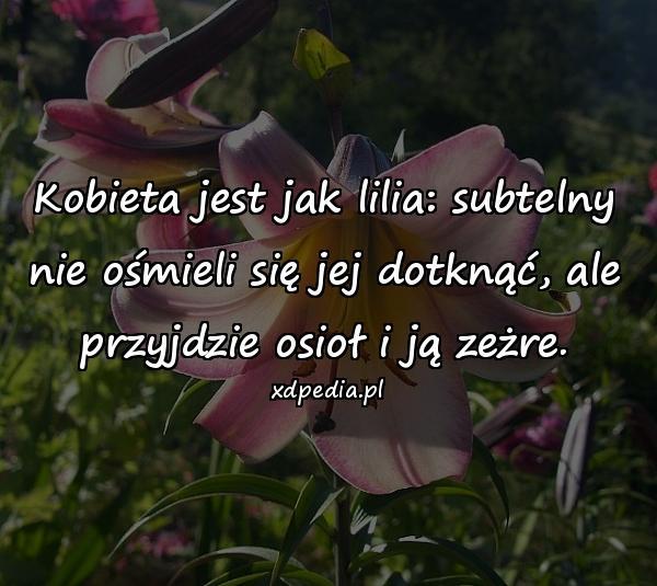 Kobieta jest jak lilia: subtelny nie ośmieli się jej dotknąć, ale przyjdzie osioł i ją zeżre.