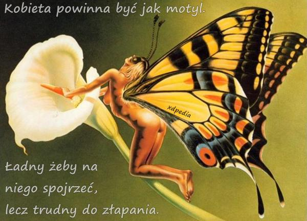 Kobieta powinna być jak motyl. Ładny żeby na niego spojrzeć, lecz trudny do złapania.