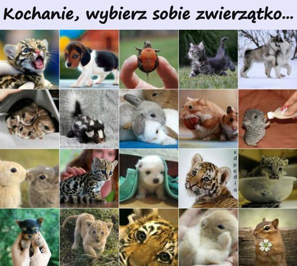 Kochanie, wybierz sobie zwierzątko... Tagi: demotywator, prezent, zwierzątko, demotywatory, demot, zwierzątka.