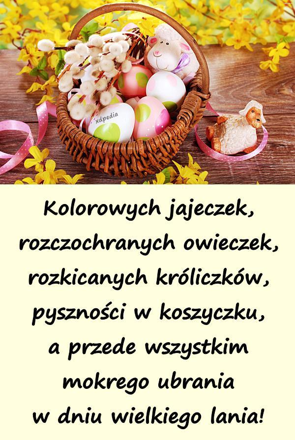 kolorowych_jajeczek_rozczochranych_owiec