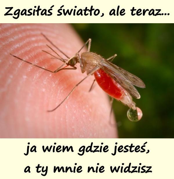 Komar: Zgasiłaś światło, ale teraz... ja wiem gdzie jesteś, a ty mnie nie widzisz