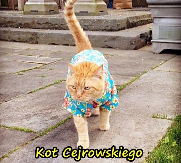 Kot Cejrowskiego?