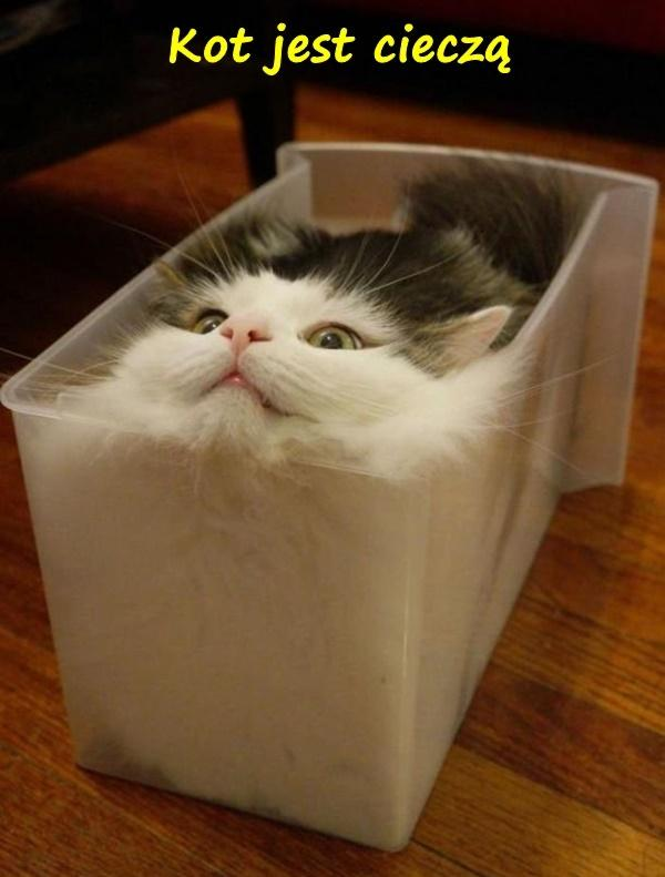 Kot jest cieczą