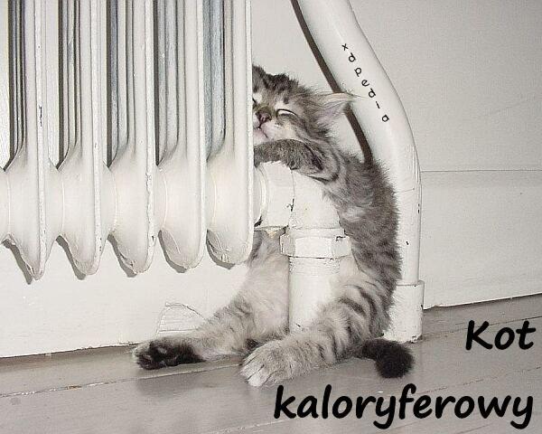 Kot kaloryferowy