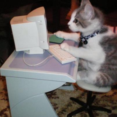 Kot: Choruję na ZUI zespół uzależnienia od internetu lub jak wolisz sieciocholizm xD