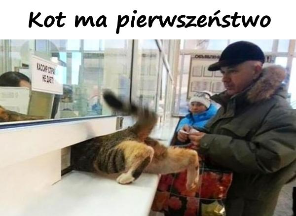 Kot ma pierwszeństwo