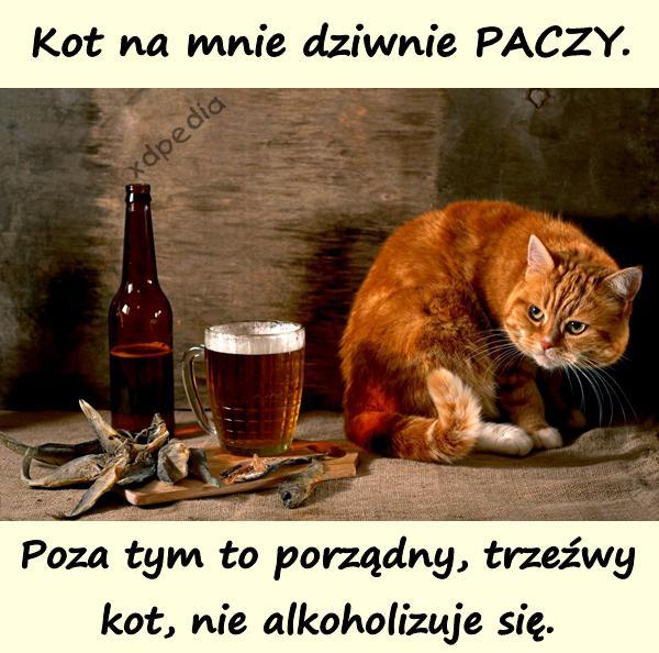 Kot na mnie dziwnie PACZY. Poza tym to porządny, trzeźwy kot, nie alkoholizuje się.