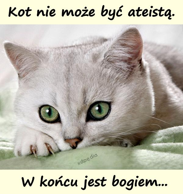 Kot nie może być ateistą. W końcu jest bogiem...