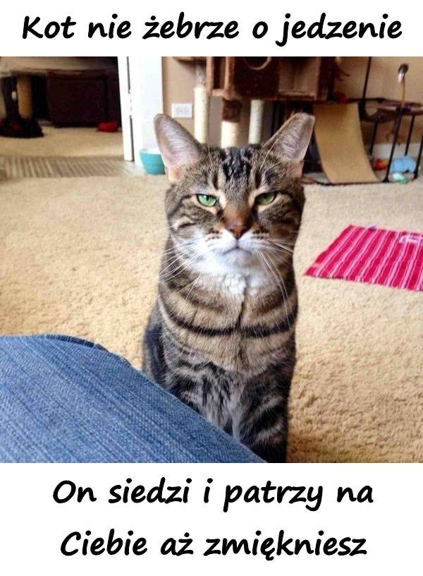 Kot nie żebrze o jedzenie. On siedzi i patrzy na Ciebie aż zmiękniesz.
