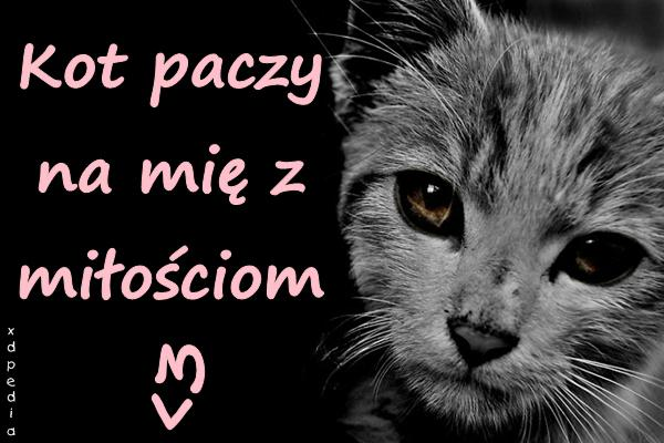 Kot paczy na mię z miłościom <3