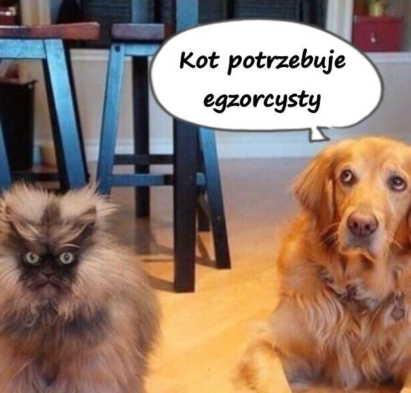 Kot potrzebuje egzorcysty